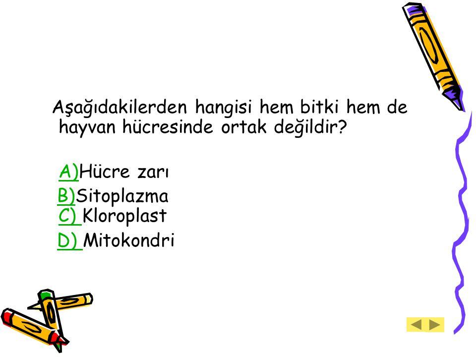 Aşağıdakilerden hangisi hem bitki hem de hayvan hücresinde ortak değildir? A)A)Hücre zarı B)Sitoplazma C) KloroplastB) C) D) MitokondriD)
