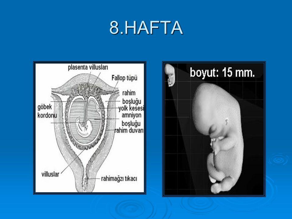 8.HAFTA