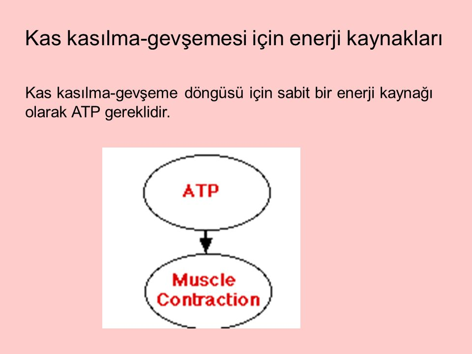Kas kasılma-gevşemesi için enerji kaynakları Kas kasılma-gevşeme döngüsü için sabit bir enerji kaynağı olarak ATP gereklidir.