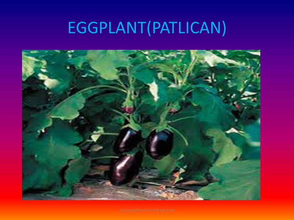 EGGPLANT(PATLICAN) www.egitimcininadresi.com