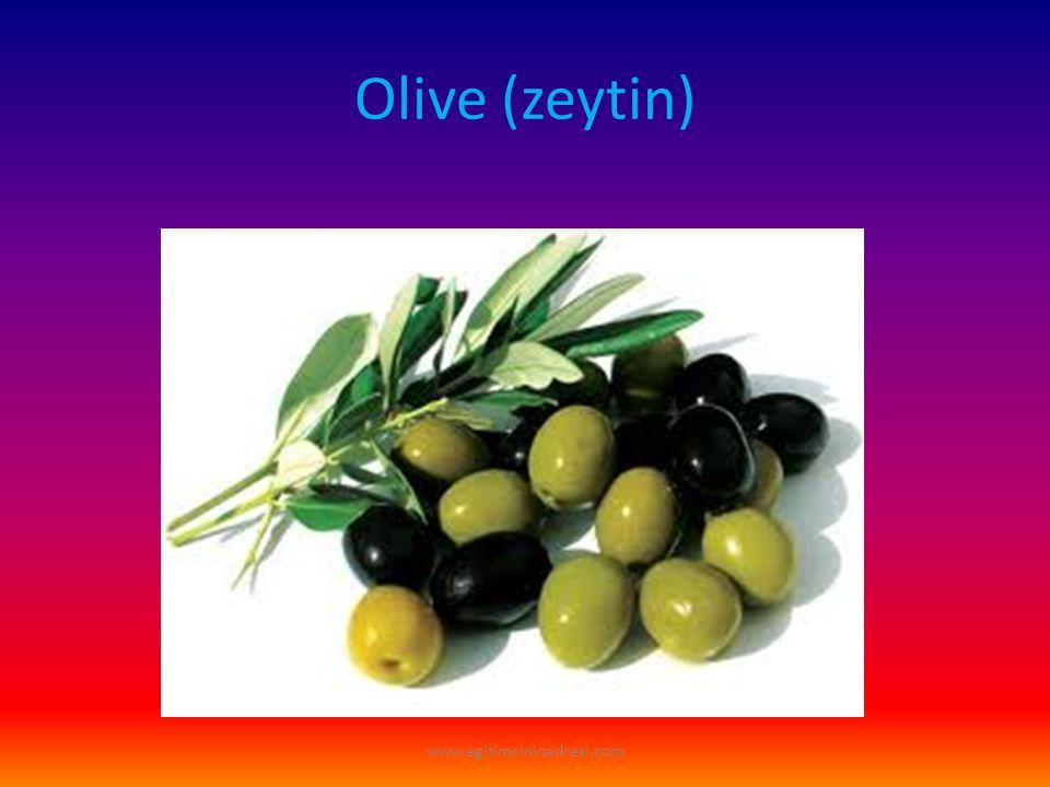 Olive (zeytin) www.egitimcininadresi.com