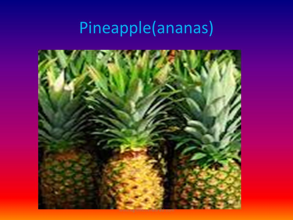 Pineapple(ananas) www.egitimcininadresi.com
