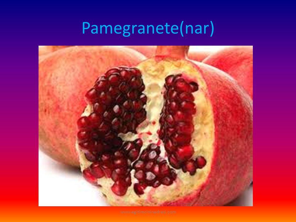 Pamegranete(nar) www.egitimcininadresi.com