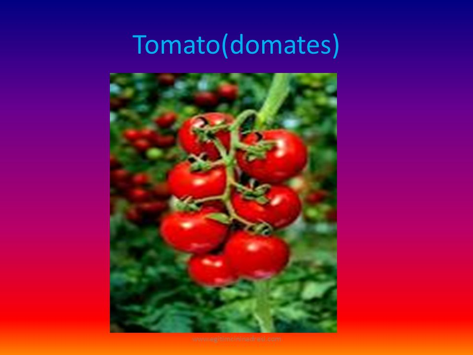 Tomato(domates) www.egitimcininadresi.com