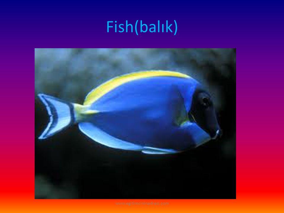 Fish(balık) www.egitimcininadresi.com