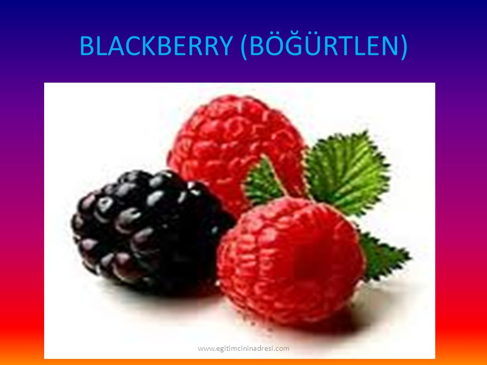 BLACKBERRY (BÖĞÜRTLEN) www.egitimcininadresi.com