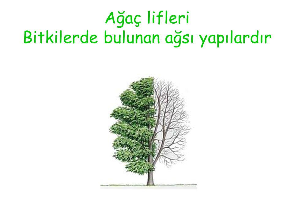 Ağaç lifleri Bitkilerde bulunan ağsı yapılardır
