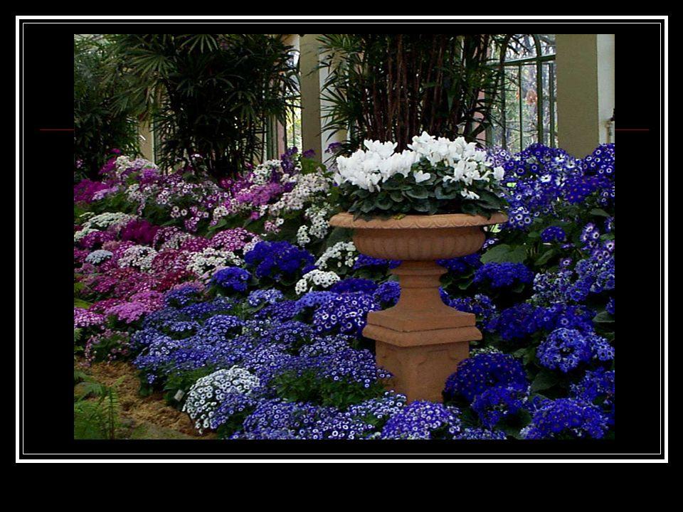 TASARIM ÖZELLİKLERİ: Çiçeklerinin renkleriyle dikkat çeker.