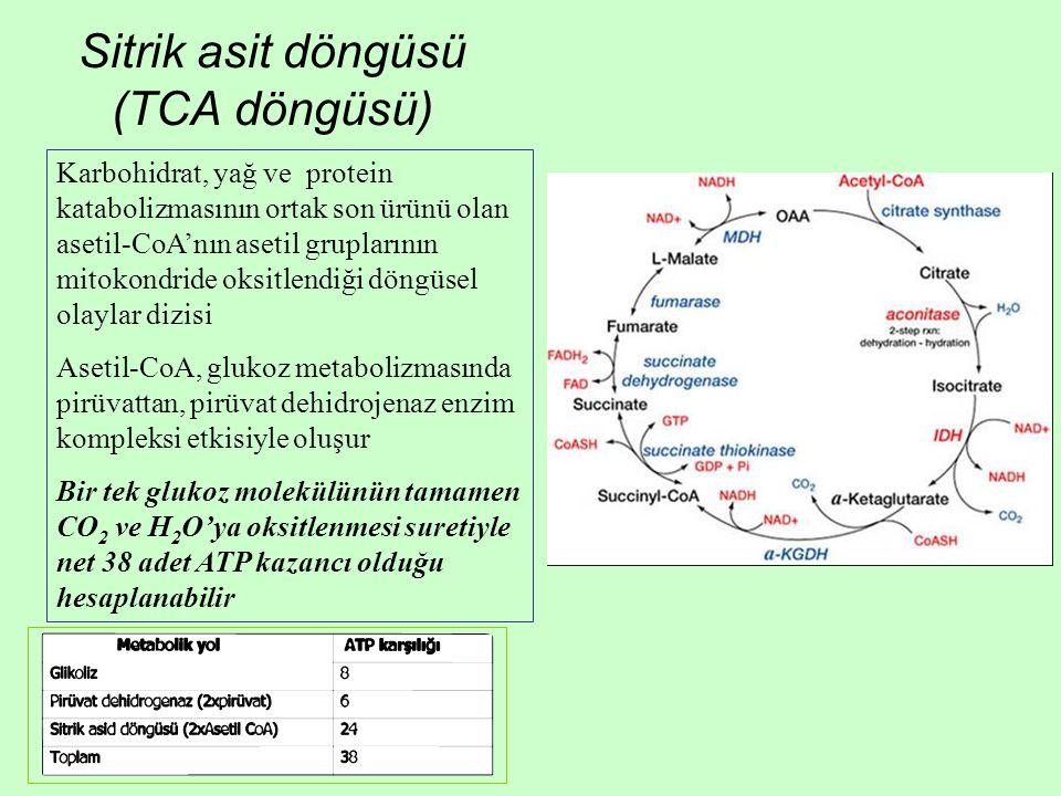 Sitrik asit döngüsü (TCA döngüsü) Karbohidrat, yağ ve protein katabolizmasının ortak son ürünü olan asetil-CoA'nın asetil gruplarının mitokondride oksitlendiği döngüsel olaylar dizisi Asetil-CoA, glukoz metabolizmasında pirüvattan, pirüvat dehidrojenaz enzim kompleksi etkisiyle oluşur Bir tek glukoz molekülünün tamamen CO 2 ve H 2 O'ya oksitlenmesi suretiyle net 38 adet ATP kazancı olduğu hesaplanabilir