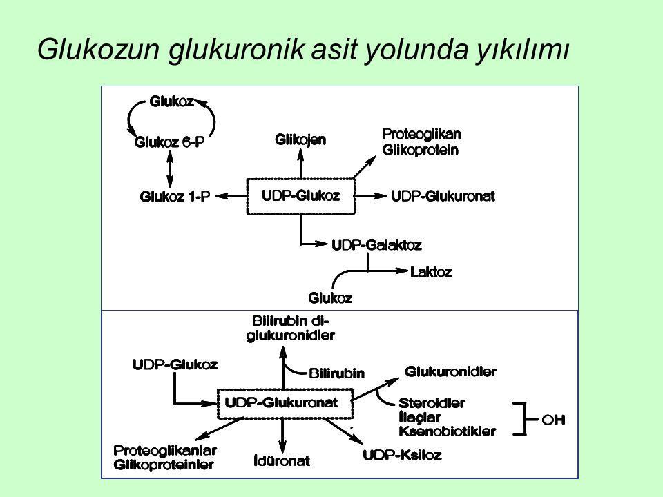 Glukozun glukuronik asit yolunda yıkılımı