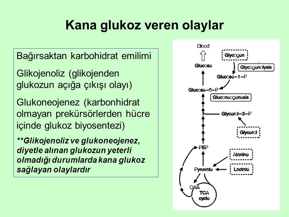 Kana glukoz veren olaylar Bağırsaktan karbohidrat emilimi Glikojenoliz (glikojenden glukozun açığa çıkışı olayı) Glukoneojenez (karbonhidrat olmayan prekürsörlerden hücre içinde glukoz biyosentezi) **Glikojenoliz ve glukoneojenez, diyetle alınan glukozun yeterli olmadığı durumlarda kana glukoz sağlayan olaylardır