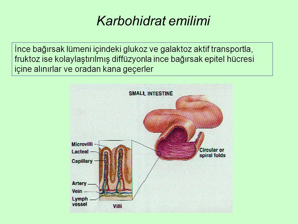 Karbohidrat emilimi İnce bağırsak lümeni içindeki glukoz ve galaktoz aktif transportla, fruktoz ise kolaylaştırılmış diffüzyonla ince bağırsak epitel hücresi içine alınırlar ve oradan kana geçerler