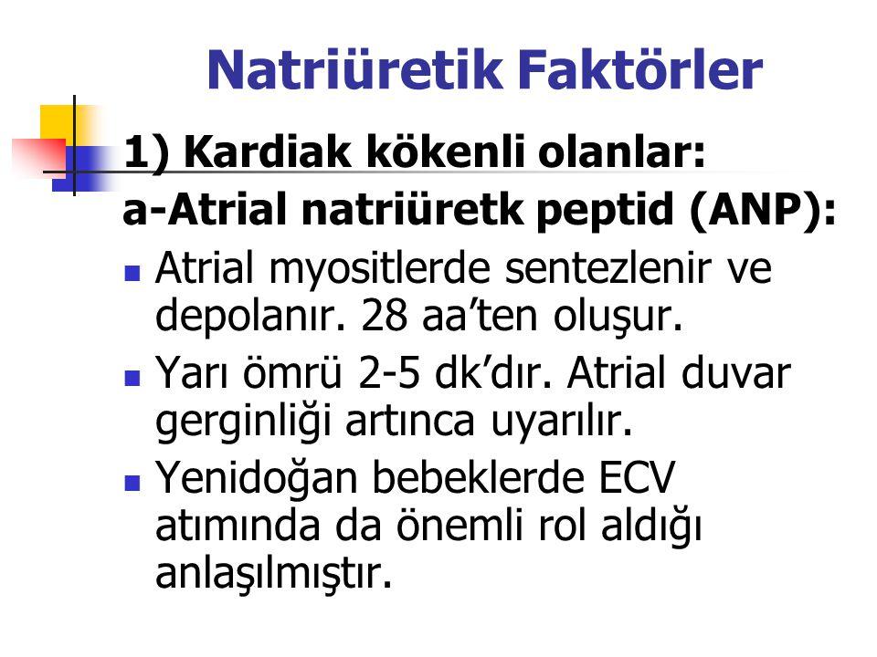 Natriüretik Faktörler 1) Kardiak kökenli olanlar: a-Atrial natriüretk peptid (ANP): Atrial myositlerde sentezlenir ve depolanır. 28 aa'ten oluşur. Yar