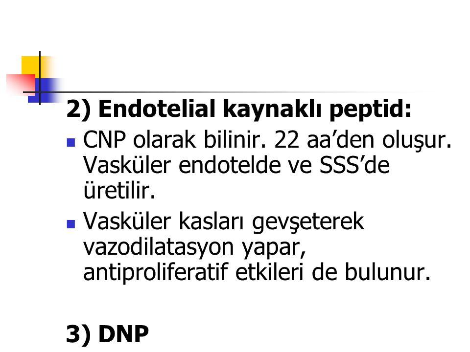 2) Endotelial kaynaklı peptid: CNP olarak bilinir. 22 aa'den oluşur. Vasküler endotelde ve SSS'de üretilir. Vasküler kasları gevşeterek vazodilatasyon