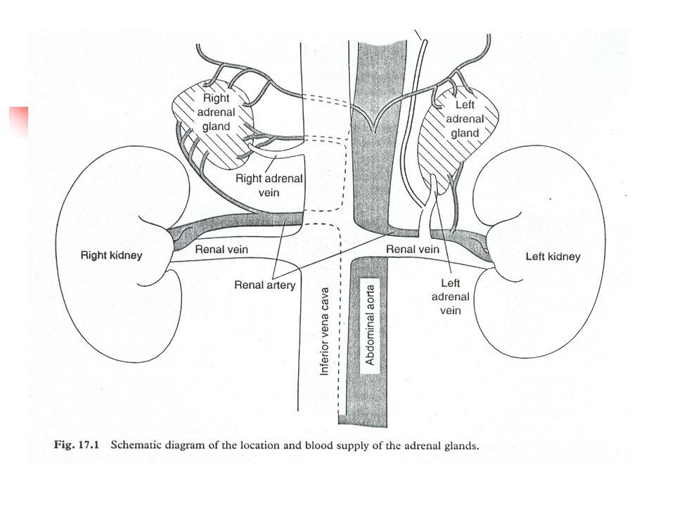 Akut adrenal krize yol açan etkenler farklı olsa da klinik ve laboratuar bulgular çoğu yönden benzerlik gösterir.
