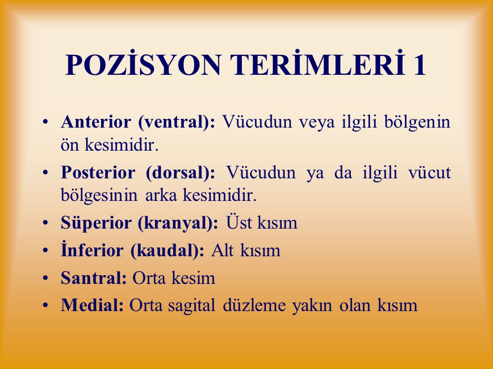 POZİSYON TERİMLERİ 1 Anterior (ventral): Vücudun veya ilgili bölgenin ön kesimidir. Posterior (dorsal): Vücudun ya da ilgili vücut bölgesinin arka kes