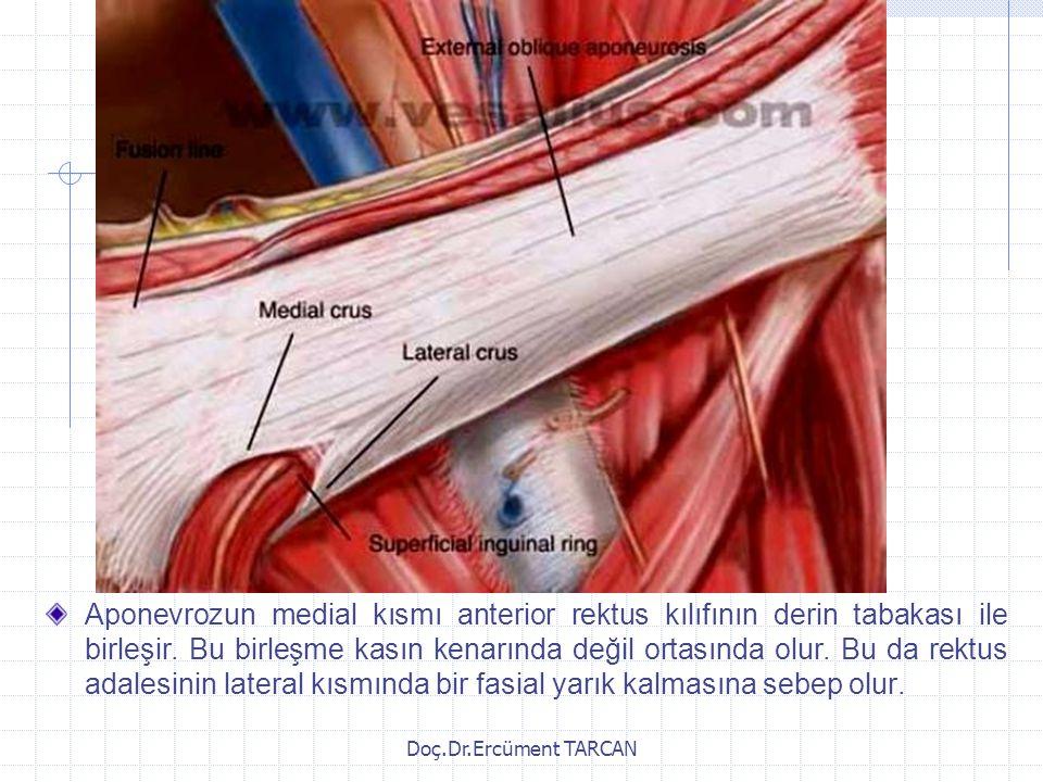 Doç.Dr.Ercüment TARCAN Aponevrozun medial kısmı anterior rektus kılıfının derin tabakası ile birleşir. Bu birleşme kasın kenarında değil ortasında olu