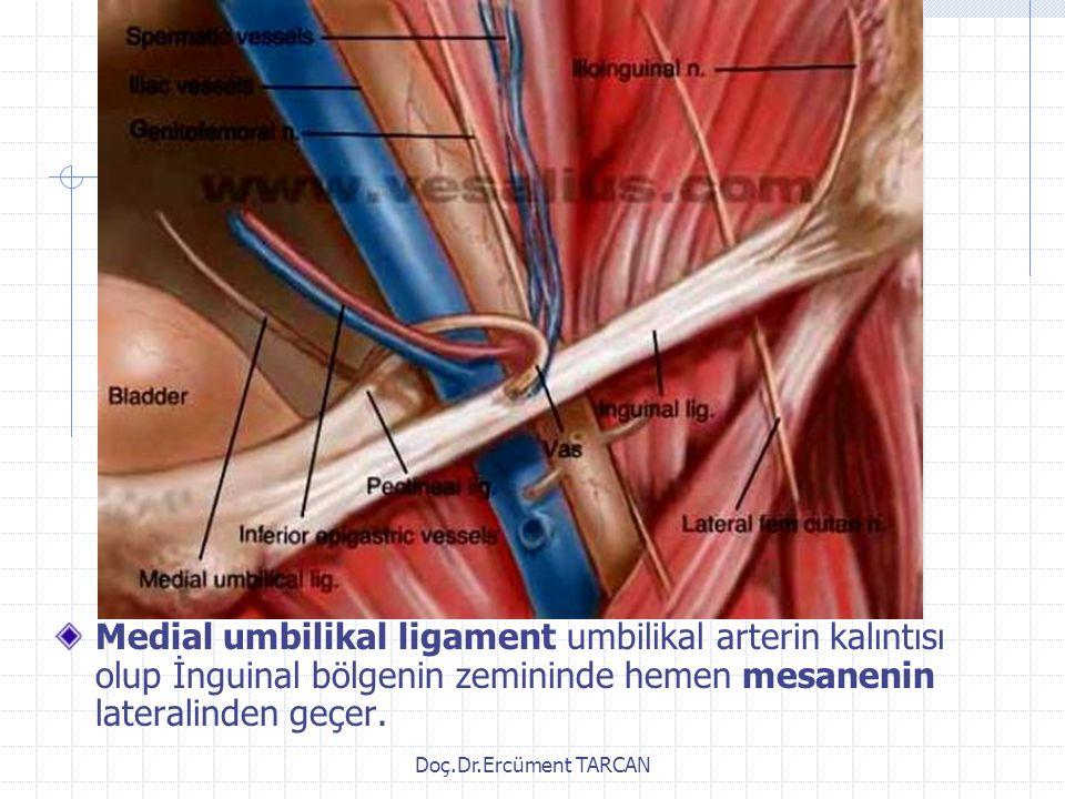 Doç.Dr.Ercüment TARCAN Medial umbilikal ligament umbilikal arterin kalıntısı olup İnguinal bölgenin zemininde hemen mesanenin lateralinden geçer.