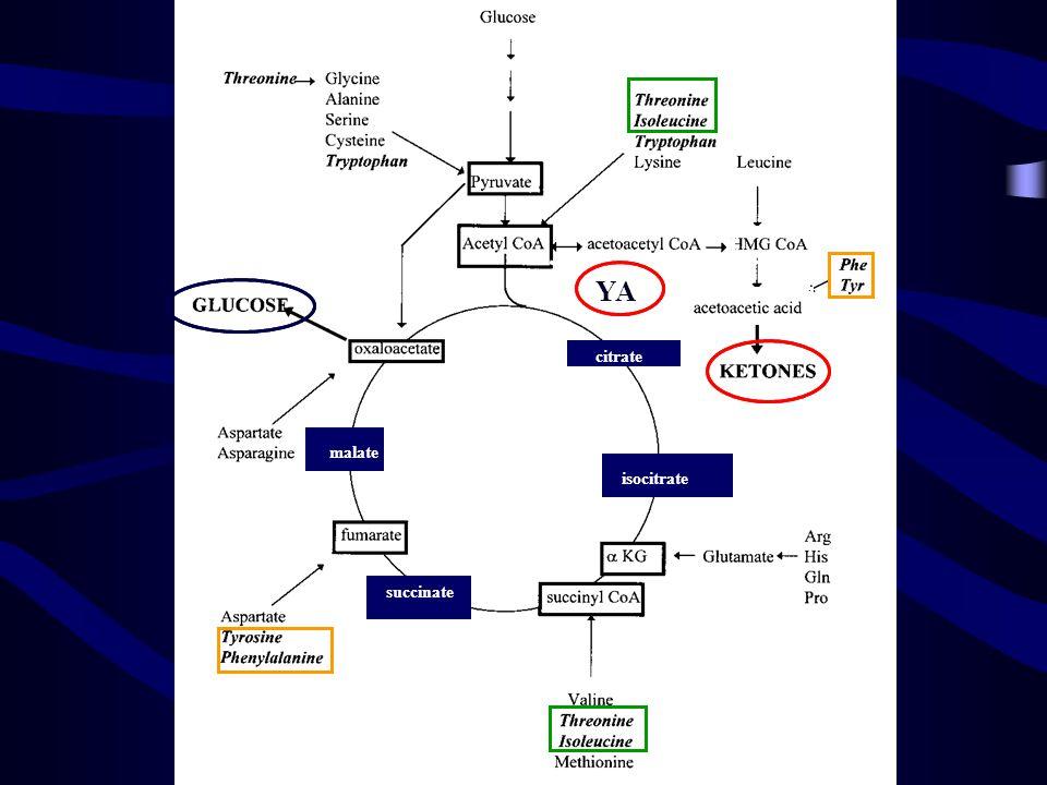 Hem ketojenik hem de glukojenik olan aa'ler Her iki grup bileşiğe de dönüşebilirler Enerji sağlamak üzere krebs döngüsünde yıkılabilirler.