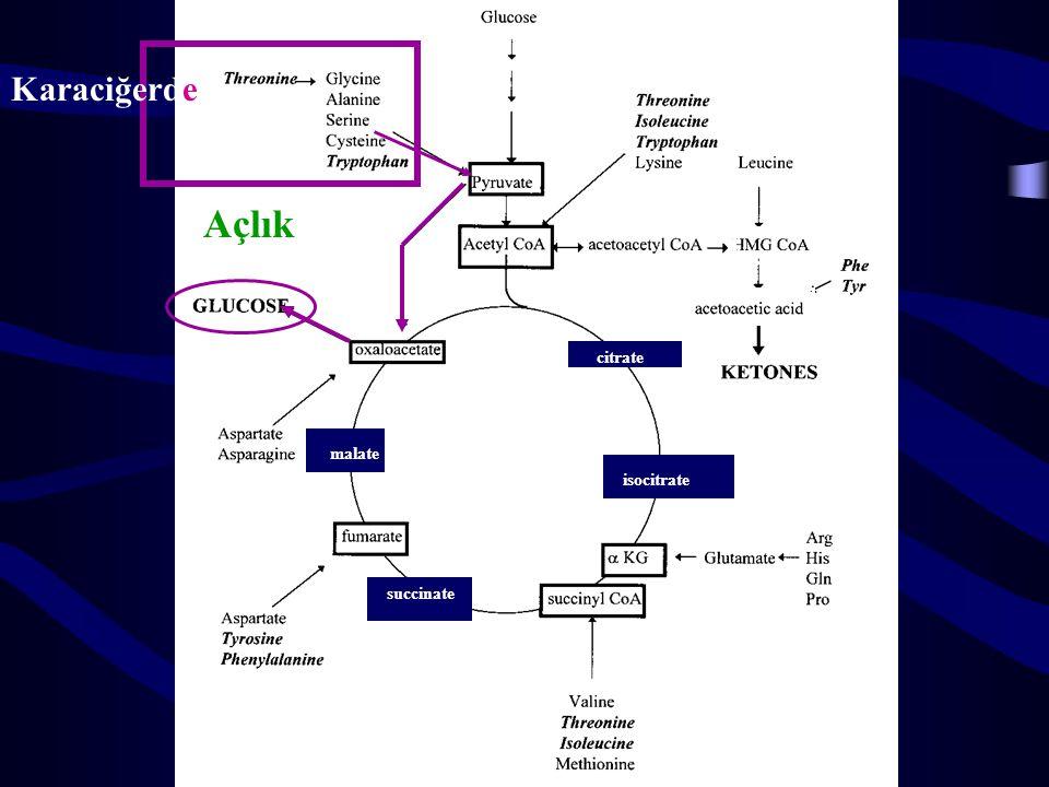 Piruvata dönüşen aa'ler Piruvat asetil KoA öncülü olduğu için piruvata dönüşen aa'ler glukojenik grubunda olmalarına rağmen lipidlere de dönüşebilir.