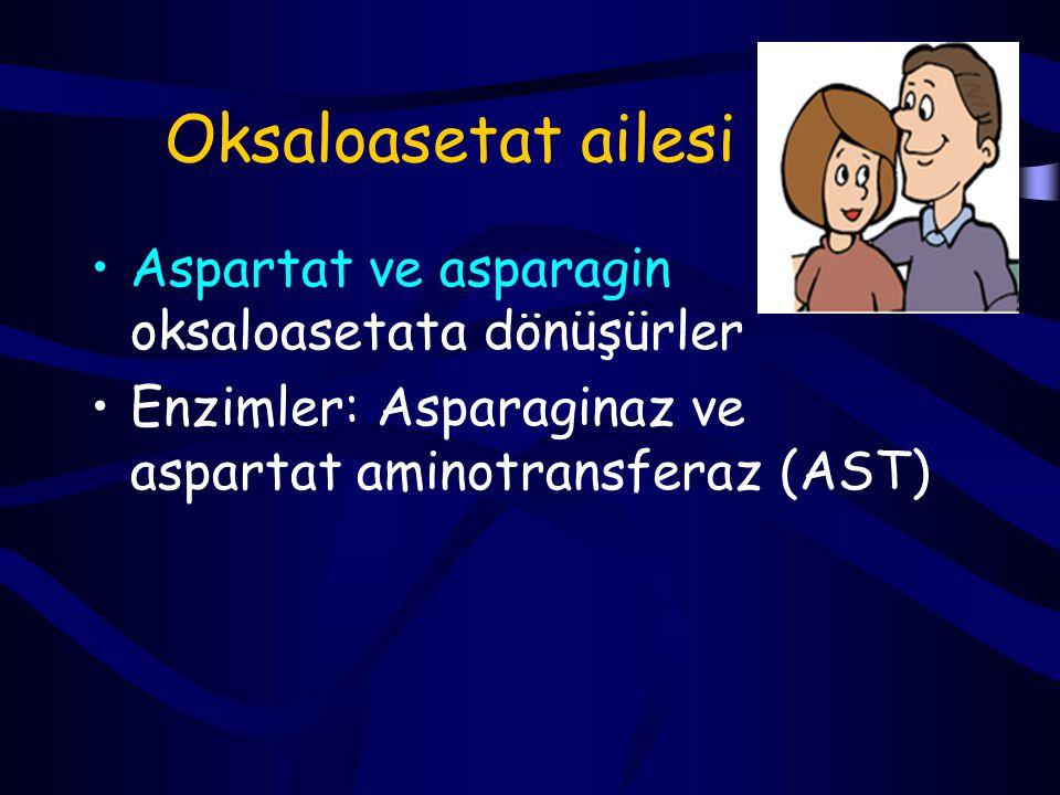 Glukojenik Alanin Arginin Aspartat Asparagin Sistein Glutamat Glisin Histidin Prolin, OH-prolin Metionin Serin Valin Glukojenik ve ketojenik İzolösin Fenilalanin Triptofan Tirozin Treonin Ketojenik Lösin Lizin