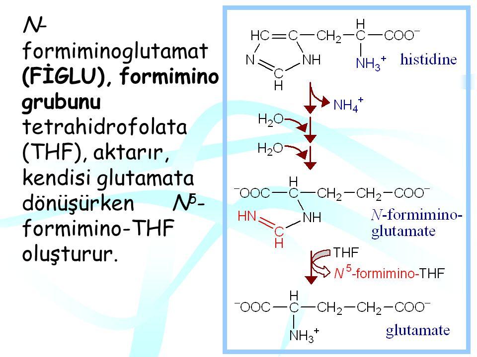 Histidin Histidin katabolizması ile glutamat ve  -ketoglutarata dönüşür.