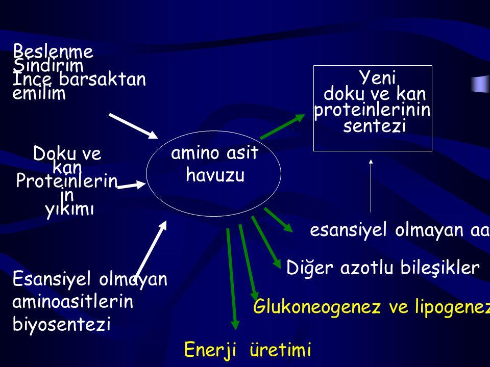 Sistin ve Sistein Sistin, sistin redüktaz ile sisteine dönüşür.