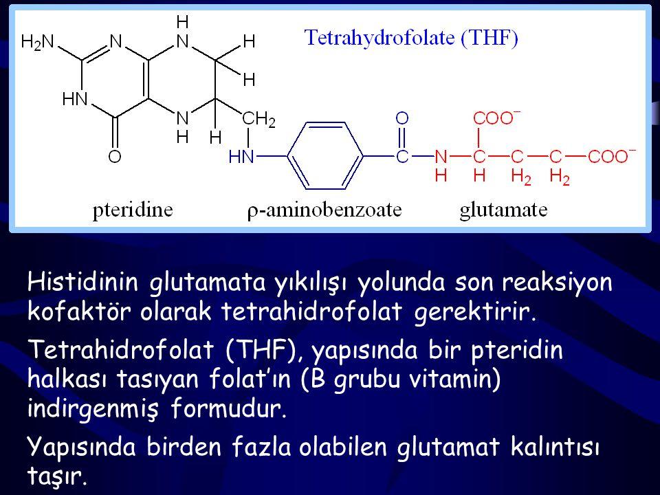 N- formiminoglutamat (FİGLU), formimino grubunu tetrahidrofolata (THF), aktarır, kendisi glutamata dönüşürken N 5 - formimino-THF oluşturur.