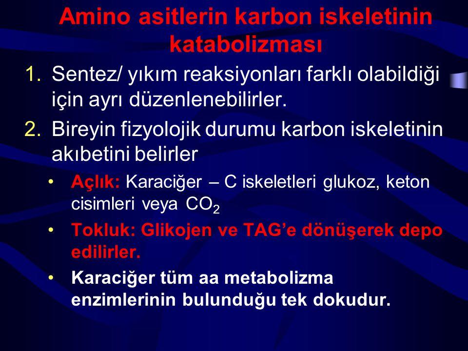 Treonin Asetil-KoA Glisin SisteinAlaninSerin Piruvat Glisin Asetaldehit  -Amino-  - ketobutirat N 5,N 10 - Methylene- THF THF ALT serin dehidrataz ÇEŞİTLİ YOLLAR serin hidroksi metil- transferaz glisin sentaz treonin dehidrogenaz Süksinil KoA SİSTEİN GLİSİN ALANİN SERİN TREONİN Piruvata dönüşümleri Willmore 2002 H 2 S SO 3 -2 SCN - Aldolaz