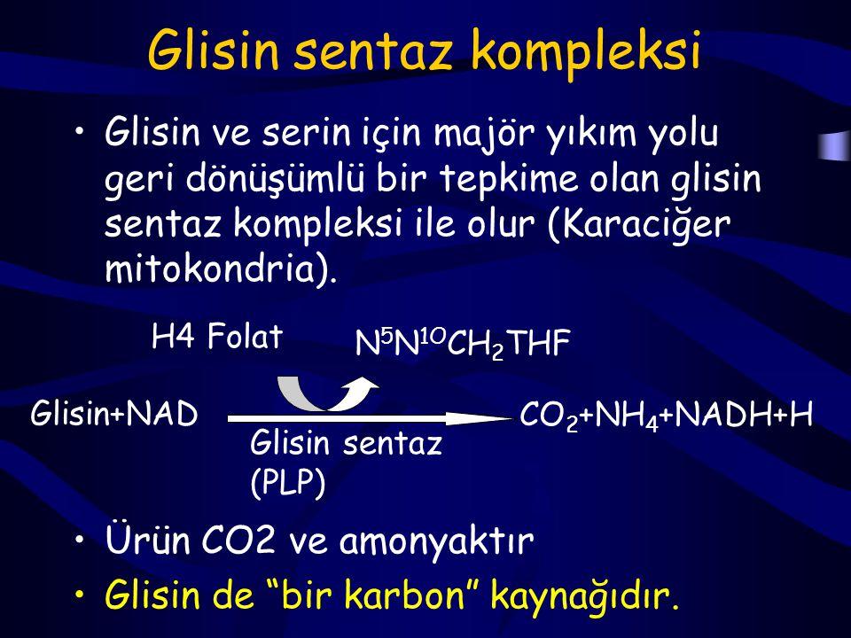 Glisin yıkım ürünleri Glisin çeşitli öncül bileşiklerden sentezlenebildiği gibi, katabolizması ile de farklı ürünler oluşabilir: Serin CO2, NH4, metilen (-CH2) Glioksalat