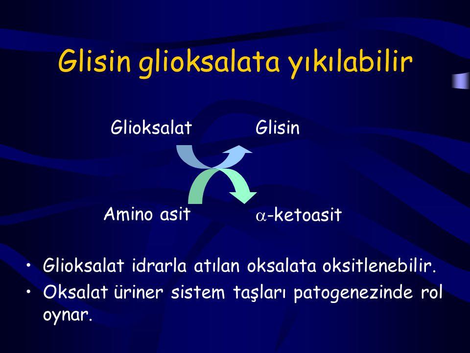 Glisin sentaz kompleksi Glisin ve serin için majör yıkım yolu geri dönüşümlü bir tepkime olan glisin sentaz kompleksi ile olur (Karaciğer mitokondria).