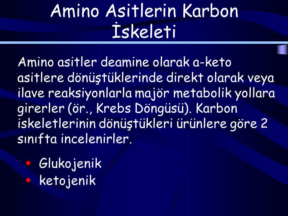 Amino Asitlerin Karbon İskeleti Amino asitler deamine olarak a-keto asitlere dönüştüklerinde direkt olarak veya ilave reaksiyonlarla majör metabolik yollara girerler (ör., Krebs Döngüsü).