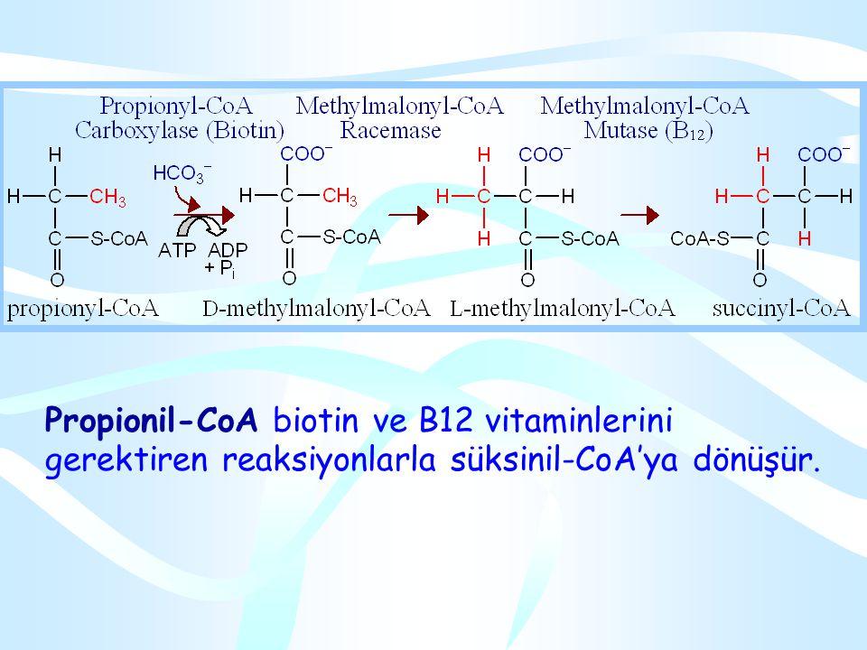 Homosistein + Serin NH4 Sistatyonin Sistatyonin  sentaz Sistein  -Keto bütirat Propionil CoA