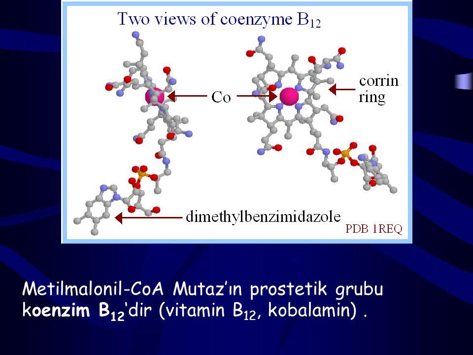 Propionil-CoA biotin ve B12 vitaminlerini gerektiren reaksiyonlarla süksinil-CoA'ya dönüşür.