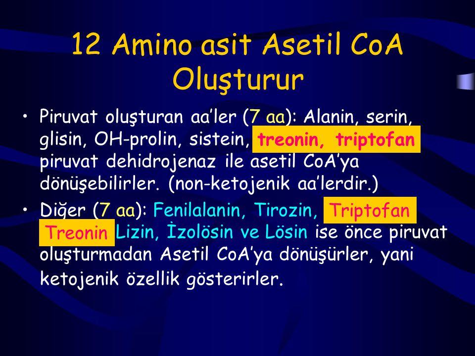 LösinValinİzolösin Transaminasyon Oksidatif Dekarboksilasyon Dehidrojenasyon Asetoasetat Propionil CoA Asetil CoA Metil malonil CoA B12 koenzim Süksinil CoA