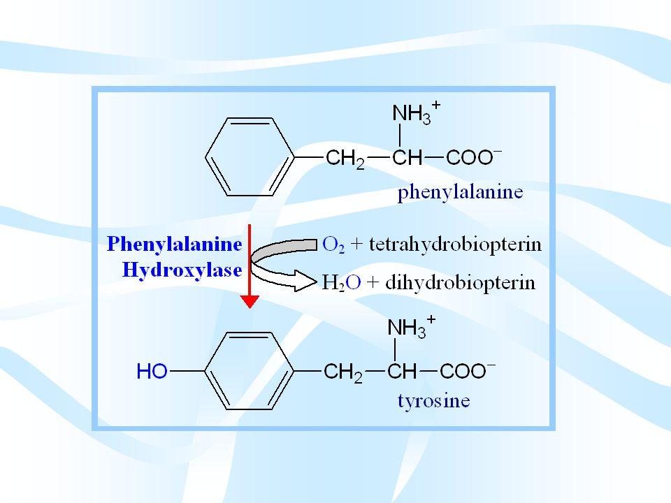 Fenilalanin Tirozine Dönüşür Fenilalanin'in tirozine dönüşümü tirozin sentezinde gördüğümüz fenil alanin hidroksilaz reaksiyonudur.