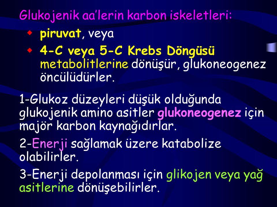 Glukojenik aa'lerin karbon iskeletleri:  piruvat, veya  4-C veya 5-C Krebs Döngüsü metabolitlerine dönüşür, glukoneogenez öncülüdürler.