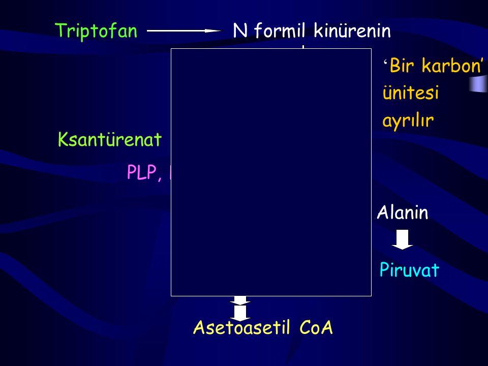 Triptofan İlk basamağı triptofan oksijenaz (triptofan pirolaz) kataliz eder.