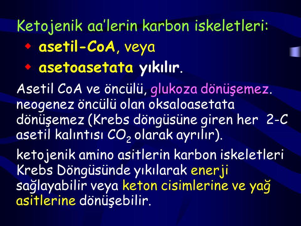 Ketojenik aa'lerin karbon iskeletleri:  asetil-CoA, veya  asetoasetata yıkılır.