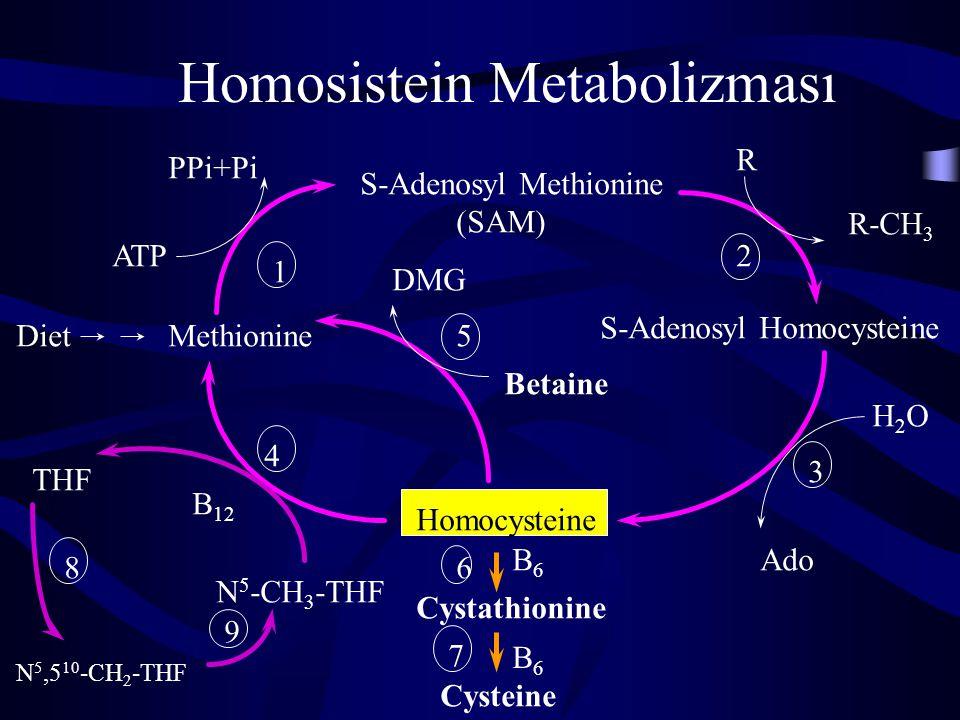 Vitamin B12 (devam) 2- Metionin'in homosisteinden rejenerasyonu: B12 türevi olan metil kobalamin ve N 5 -metil- tetrahidrofolat (N 5 -metil-THF) metioninin homosisteinden yeniden sentezinde gereklidirler.