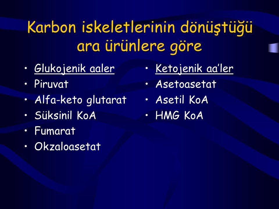 Karbon iskeletlerinin dönüştüğü ara ürünlere göre Glukojenik aaler Piruvat Alfa-keto glutarat Süksinil KoA Fumarat Okzaloasetat Ketojenik aa'ler Asetoasetat Asetil KoA HMG KoA