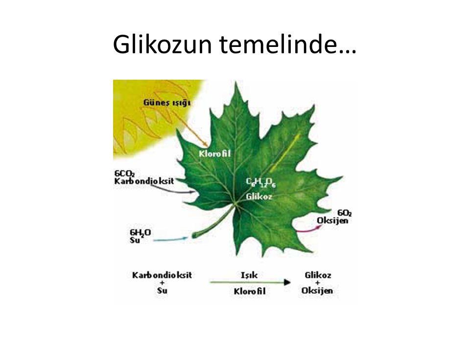 Glikozun temelinde…