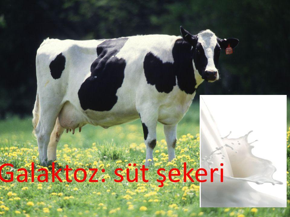 Galaktoz: süt şekeri
