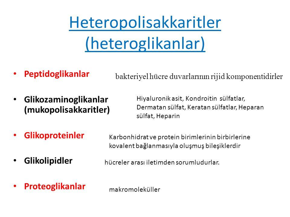 Heteropolisakkaritler (heteroglikanlar) Peptidoglikanlar Glikozaminoglikanlar (mukopolisakkaritler) Glikoproteinler Glikolipidler Proteoglikanlar bakt