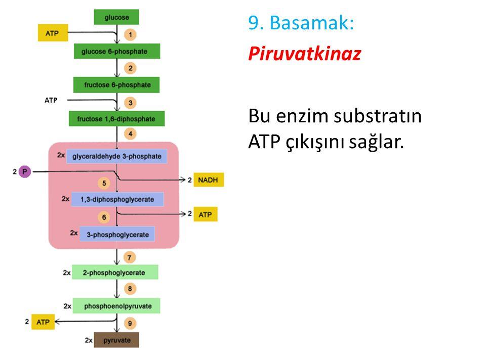 9. Basamak: Piruvatkinaz Bu enzim substratın ATP çıkışını sağlar. ATP