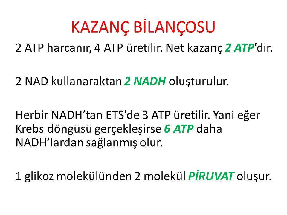 KAZANÇ BİLANÇOSU 2 ATP harcanır, 4 ATP üretilir. Net kazanç 2 ATP'dir. 2 NAD kullanaraktan 2 NADH oluşturulur. Herbir NADH'tan ETS'de 3 ATP üretilir.
