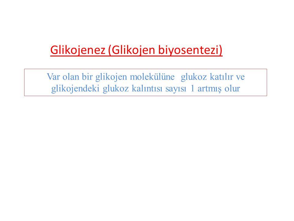 Glikojenez (Glikojen biyosentezi) Var olan bir glikojen molekülüne glukoz katılır ve glikojendeki glukoz kalıntısı sayısı 1 artmış olur