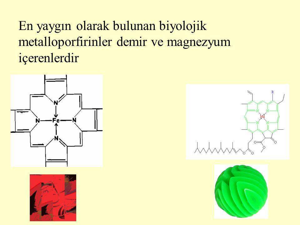 Hemoglobindeki 4 hemin her biri bir protoporfirin III ve bir Fe 2+ içerir Hemoglobin, molekülünde içerdiği toplam 4 adet Fe 2+ sayesinde akciğerlerden dokulara O 2 molekülü taşıyabilmektedir.