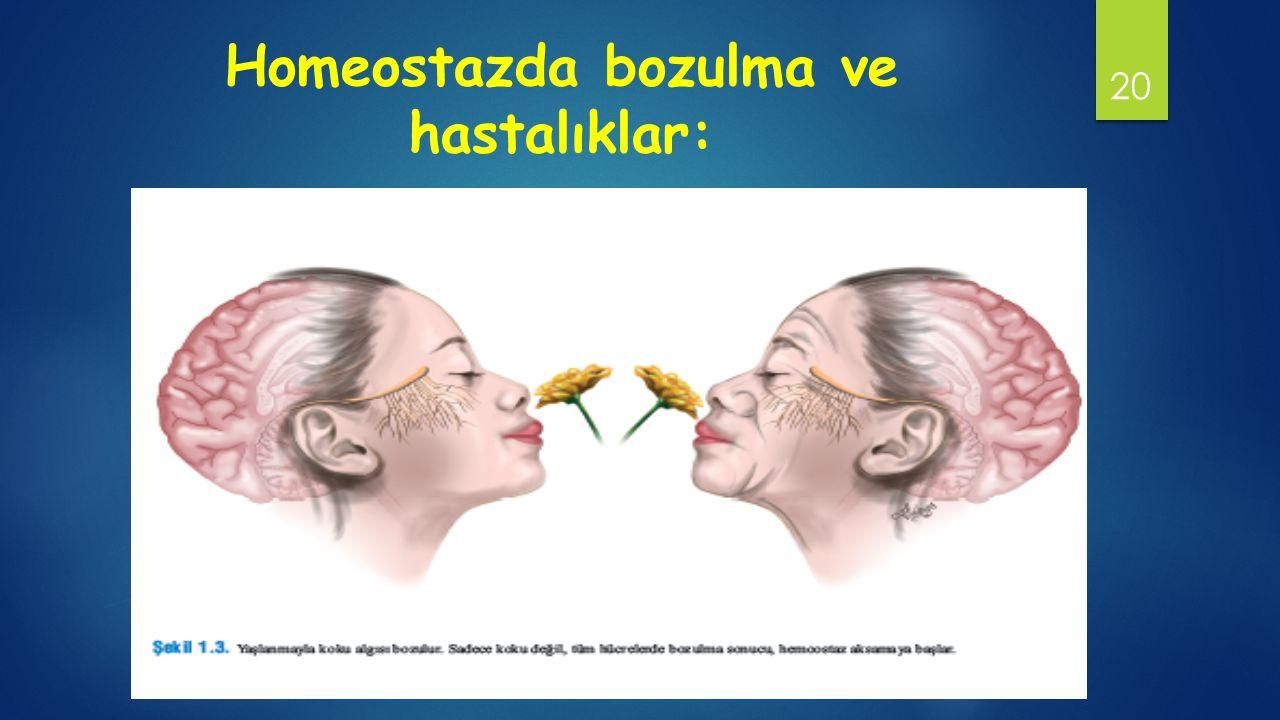 Homeostazda bozulma ve hastalıklar: 20