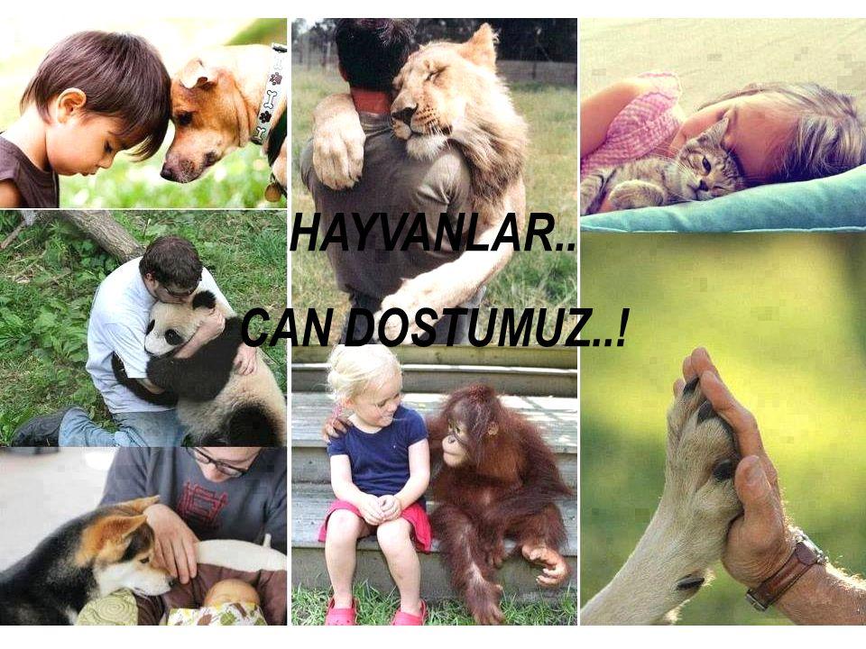 HAYVANLAR… CAN DOSTLARIMIZ… HAYVANLAR.. CAN DOSTUMUZ..!